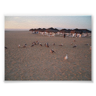birds on the beach in Cabo print Posters