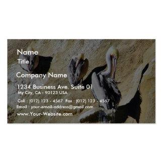 Birds Pelicans Poop Business Card Templates
