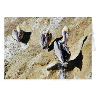 Birds Pelicans Poop Card