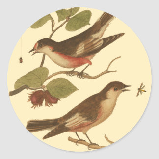 Birds Perched on Branches Eating Insects Classic Round Sticker
