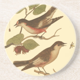 Birds Perched on Branches Eating Insects Coaster