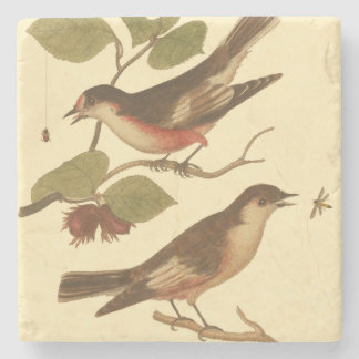Birds Perched on Branches Eating Insects Stone Coaster