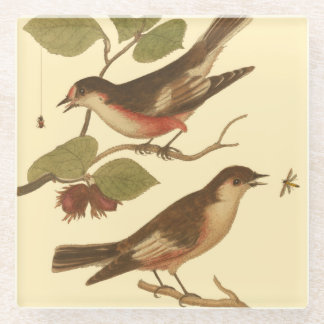Birds Perched on Branches Eating Insects Glass Coaster