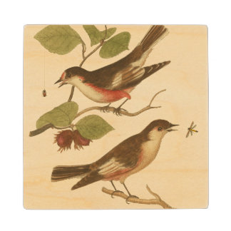Birds Perched on Branches Eating Insects Wood Coaster