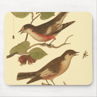 Birds Perched on Branches Eating Insects Mouse Pad