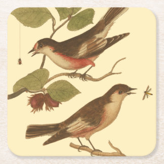 Birds Perched on Branches Eating Insects Square Paper Coaster