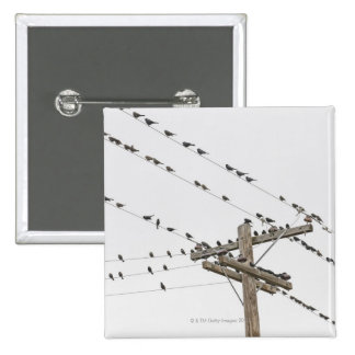 Birds perched on wires 2 inch square button