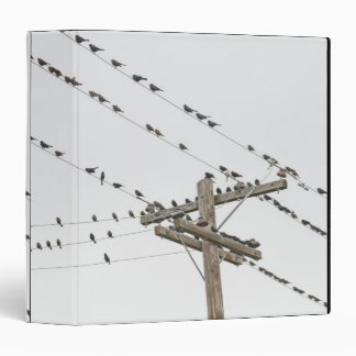 Birds perched on wires 3 ring binder