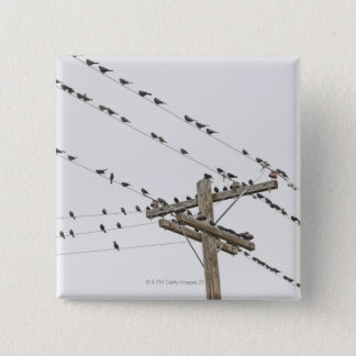 Birds perched on wires button