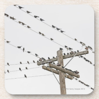 Birds perched on wires beverage coaster