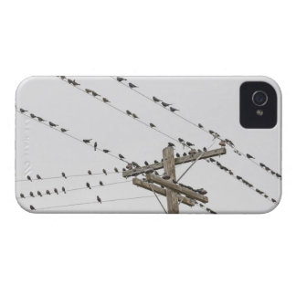 Birds perched on wires iPhone 4 Case-Mate case
