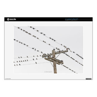 Birds perched on wires laptop skin