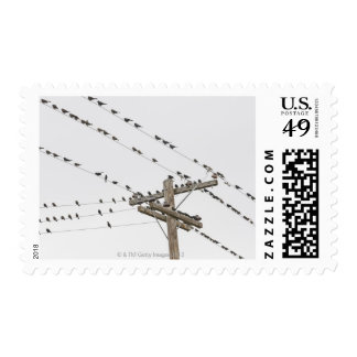 Birds perched on wires postage stamp