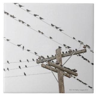 Birds perched on wires tiles