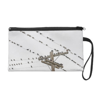 Birds perched on wires wristlet purse
