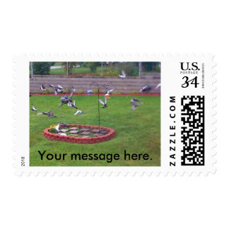 Birds Pigeons Flying Yard Your Message Stamps