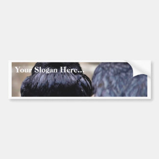 Birds Ravens Feathers Black Bumper Stickers