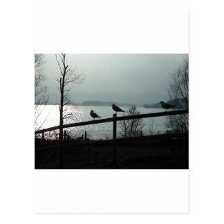Birds silhouette postcard