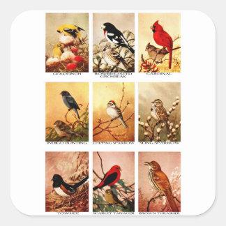 Birds Square Sticker