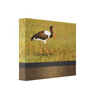 birds stork saddle billed Okavango Delta Botswana Canvas Print