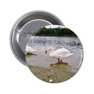 Birds Swans In Tikvara Lake 2 Inch Round Button
