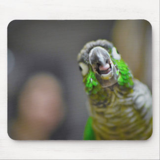 Birds the Word Mouse Pad