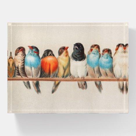 Birds vintage illustration paperweight