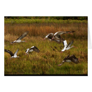 Birds - Wetlands Greeting Card