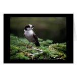 Birds Wild 192 Cards