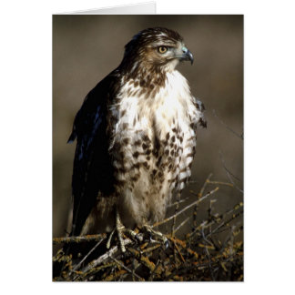 Birds Wild 232 Card