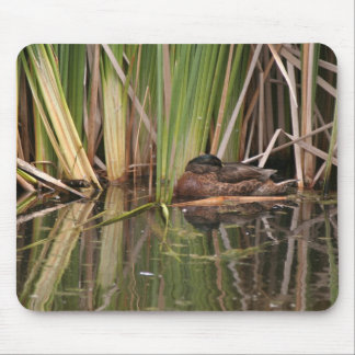 Birds Wildlife Animals Wetlands Photography Mouse Pad