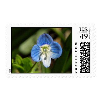 Birdseye Speedwell Postage
