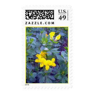 Birdsfoot Trefoil 1 Stamp