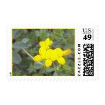 Birdsfoot Trefoil 2 Stamp