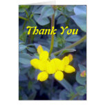 Birdsfoot Trefoil 3 Greeting Card