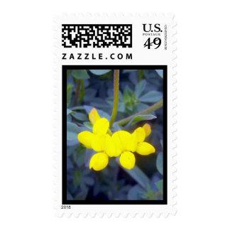 Birdsfoot Trefoil 3 Stamp