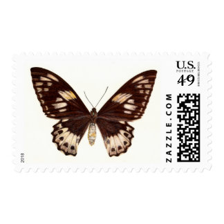 Birdwing Butterfly 3 Postage