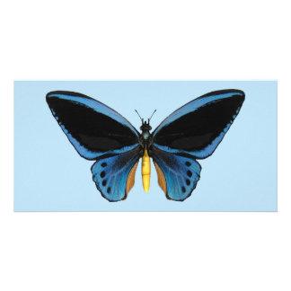 Birdwing Butterfly Card