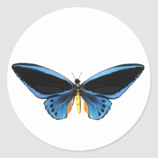 Birdwing Butterfly Classic Round Sticker