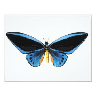 "Birdwing Butterfly 4.25"" X 5.5"" Invitation Card"