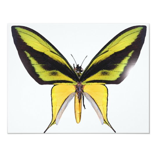 BirdWingX Butterfly Card