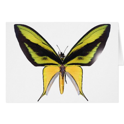 BirdWingX Butterfly Greeting Card