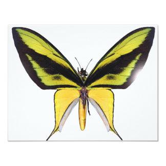BirdWingX Butterfly Invites