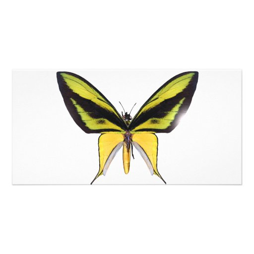 BirdWingX Butterfly Photo Card