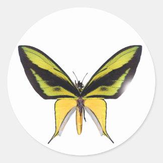 BirdWingX Butterfly Sticker