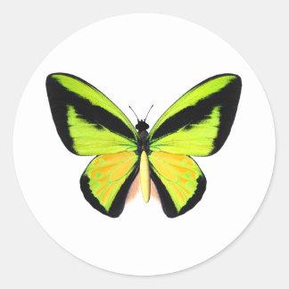 BirdWingZ Butterfly Stickers