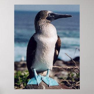 birdy Azul-con base Impresiones