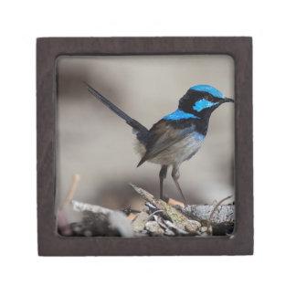 birdy birdy boo gift box