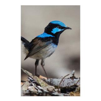birdy birdy boo stationery