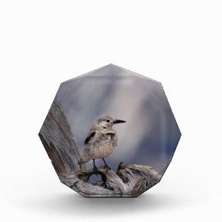 birdy love acrylic award